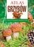 Książka ePub Atlas grzybów   ZAKŁADKA GRATIS DO KAŻDEGO ZAMÓWIENIA - Sokół Sławomir
